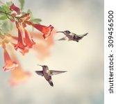 ruby throated hummingbirds... | Shutterstock . vector #309456500