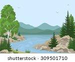 landscape with birch  fir trees ... | Shutterstock .eps vector #309501710