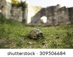 Box Turtle Crawling On A Green...