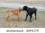 two dogs getting acquainted in park - stock photo