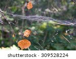 Small photo of the autumn foliage and spiderweb abstractly hang in air space in the wild wood