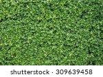 Banyan Leaves Green Wall...