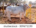 thabazimbi  south africa  ... | Shutterstock . vector #309671150