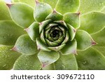 Beautiful Succulent Plant With...