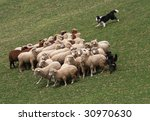Shepherd Dog With Sheep
