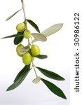 closeup of green olives branch... | Shutterstock . vector #30986122