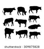 cow set black silhouette on...   Shutterstock . vector #309875828