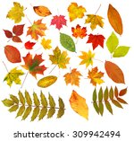 collection beautiful colourful... | Shutterstock . vector #309942494