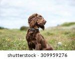 Stock photo dog 309959276
