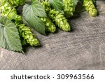 fresh green hops on a wooden... | Shutterstock . vector #309963566