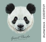 Panda Animal Cute Face. Vector...
