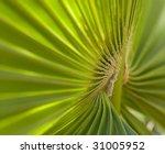 Palm Leaf Section