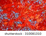 Red Maple Leaves Changing Leaf...