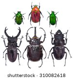close up on insect beetle ... | Shutterstock . vector #310082618
