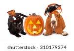 cute black kitten and basset... | Shutterstock . vector #310179374