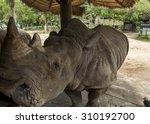 huge gray two horned rhinoceros ... | Shutterstock . vector #310192700
