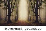 Fantasy Forest. Symmetry Insid...