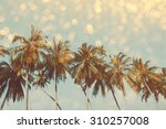 Palm Trees On Tropical Shore...