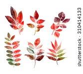 set of autumn leaves | Shutterstock . vector #310414133