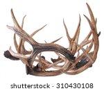 elk horns isolated on a white...   Shutterstock . vector #310430108
