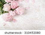 flowers. beautiful peony on the ...