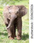 Stock photo cute baby elephant calf in this portrait image from south africa 310623026