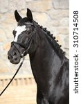 Small photo of Portrait of black dutch warmblood with bridle in front of stone wall