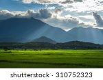 rice field with mountain range... | Shutterstock . vector #310752323