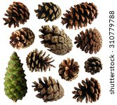 pine cone   set of vector... | Shutterstock .eps vector #310779788