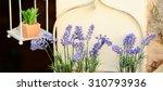 decorative lavander and other... | Shutterstock . vector #310793936