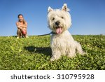 Stock photo a portrait of beautiful girl keeping pretty white west highland dog outdoor 310795928