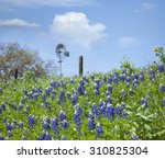 selective focus of texas... | Shutterstock . vector #310825304