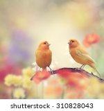 Yellow Birds Perching In The...