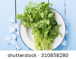 coriander | Shutterstock . vector #310858280