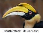 Rare Hornbill  Thailand  ...