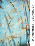 abstract detail of grasses... | Shutterstock . vector #310905794