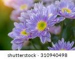 close up of purple...   Shutterstock . vector #310940498
