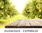 Wooden Table And Orange Trees