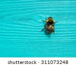 Bumblebee On Wood Grain