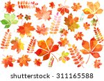 set of colorful autumn... | Shutterstock .eps vector #311165588