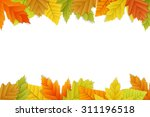 vector autumn background with... | Shutterstock .eps vector #311196518