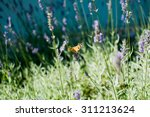 Butterfly On Flower. The...