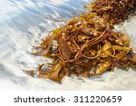 Seaweed On The Shore Of The...