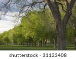 Small photo of Alley with old American elm trees at the Oval of Colorado State University campus - landmark of Fort Collins