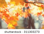 colourful leaves in autumn... | Shutterstock . vector #311303273
