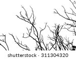 tree branches abstract... | Shutterstock . vector #311304320