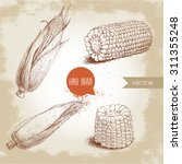 hand drawn sketch style set of... | Shutterstock .eps vector #311355248