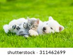Stock photo white swiss shepherd s puppy playing with tiny kitten on green grass 311462699