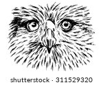 hand sketch of detail eagle face | Shutterstock .eps vector #311529320