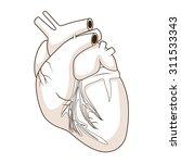 heart of a dog vector... | Shutterstock .eps vector #311533343